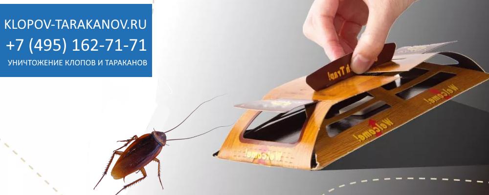 Самостоятельное уничтожение тараканов дома