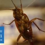 Средства от тараканов: обзор лучших средств