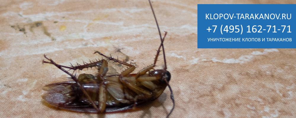 Сколько действует средство от тараканов