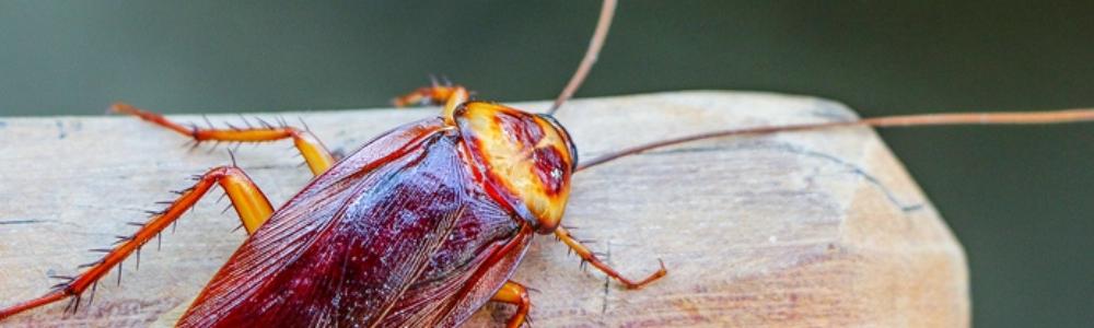 уничтожение насекомых своими руками