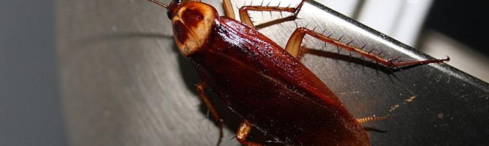 Удаление тараканов