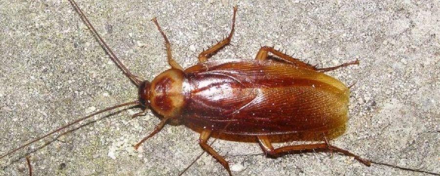 Уничтожение тараканов Верея