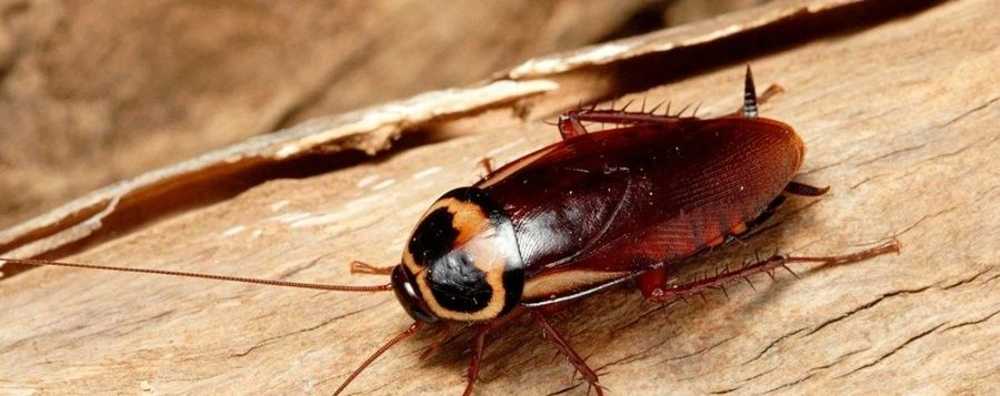 Где насекомые могут прятаться