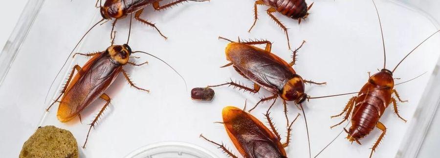 Морить тараканов